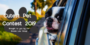 Cutest Pet, National Pet Month - Brooks Law Group