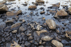 florida bp oil spill claims lawyer